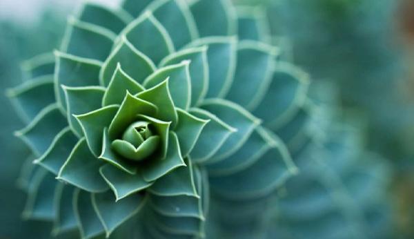Biomimétismes Bioéconomie